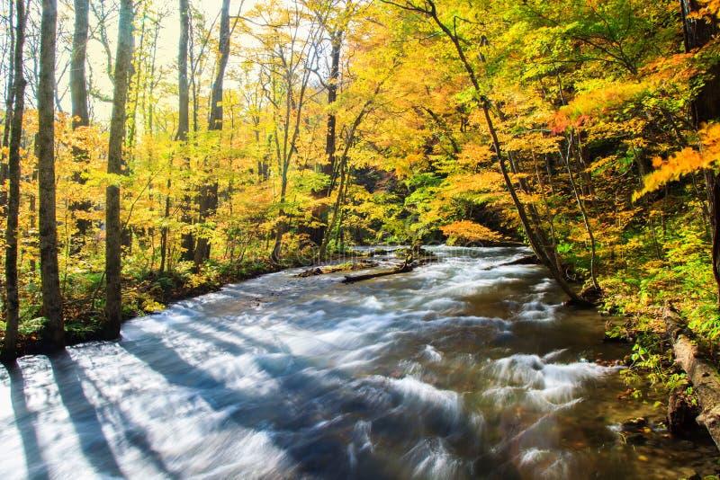 Oirase ström i höst på den Towada Hachimantai nationalparken i Aomori, Tohoku, Japan royaltyfria bilder