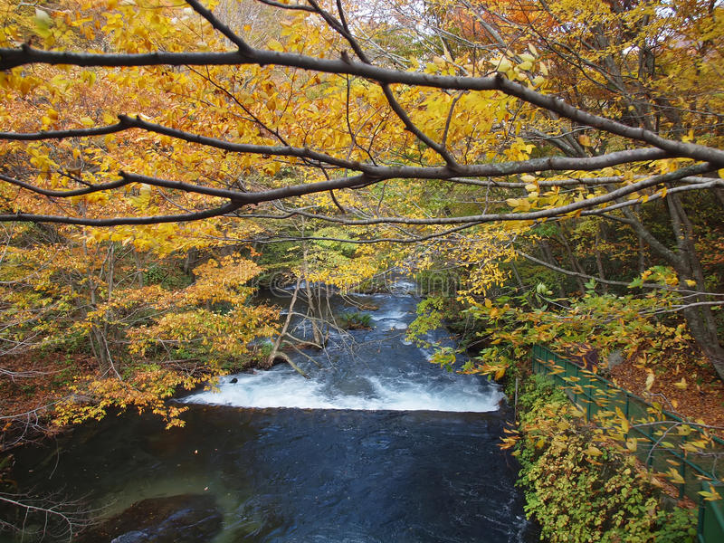 Download Oirase Streams, Aomori, Japan Stock Photo - Image of colors, japan: 35252164