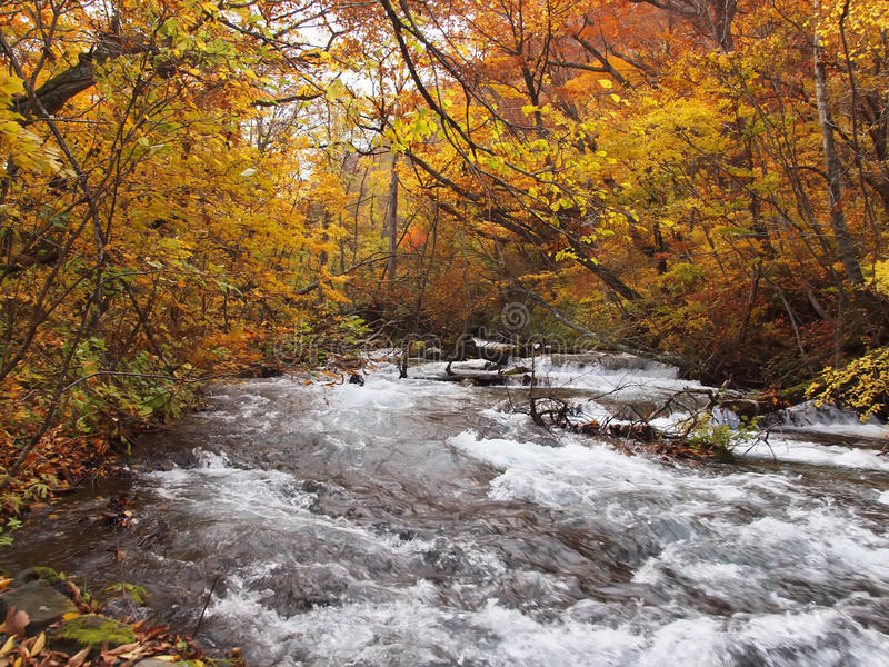 Oirase Streams, Aomori, Japan. Beautiful streams very popular to both Japanese & tourists, especially during autumn in Aomori, Japan royalty free stock photos