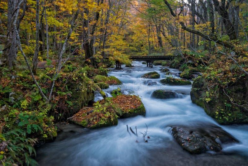 Oirase-Strom in der Herbstsaison lizenzfreie stockfotos