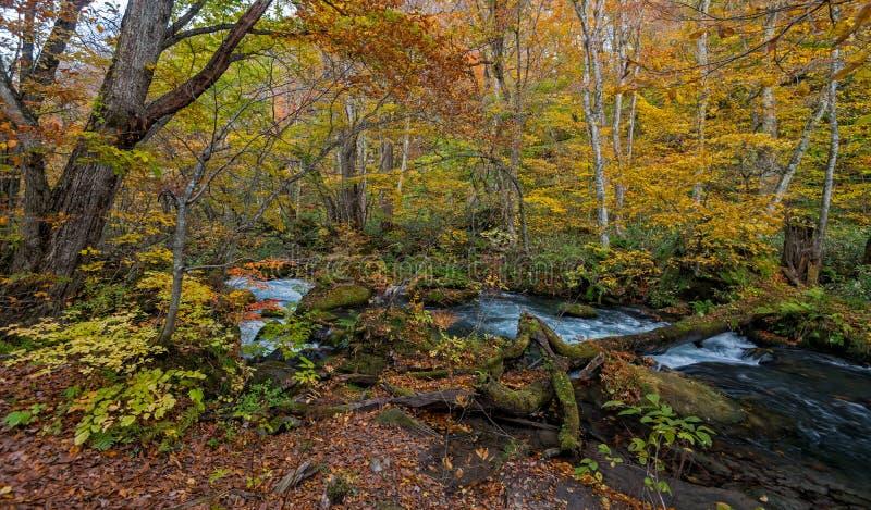 Oirase-Strom in der Herbstsaison lizenzfreies stockfoto