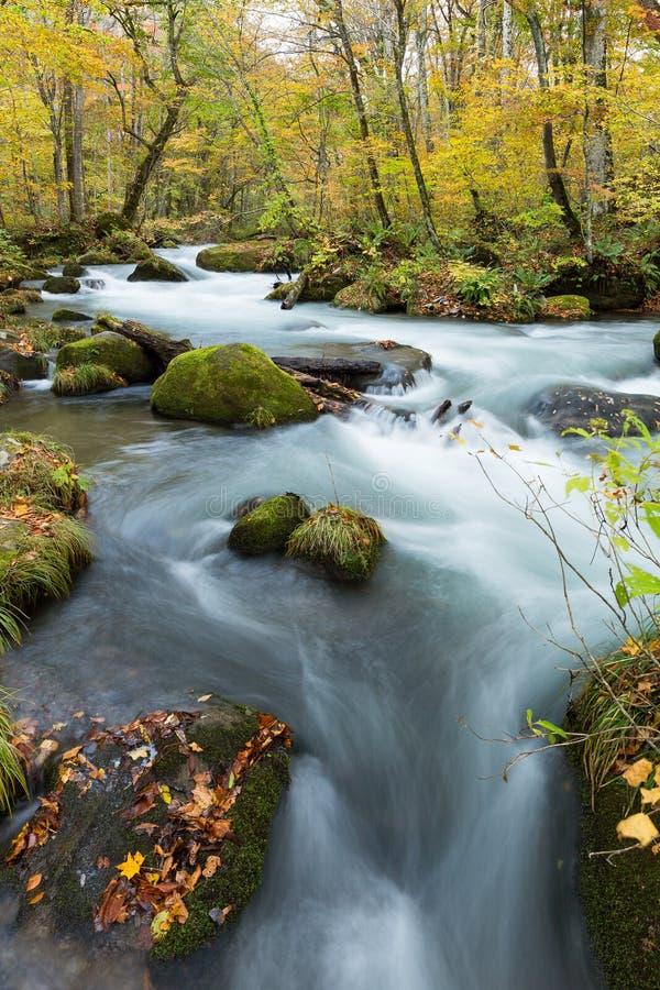 Oirase-Strom im Herbst von Japan lizenzfreie stockbilder