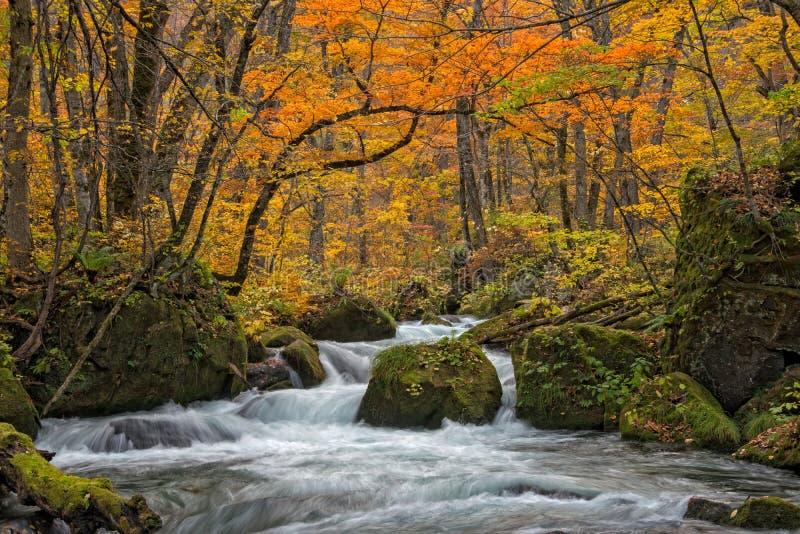 Oirase strumień w jesień sezonie zdjęcie royalty free