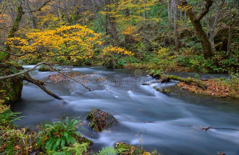 Oirasekloof in de Herfst, in Aomori, Japan stock afbeeldingen