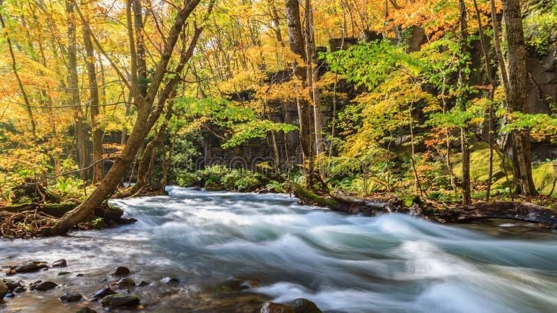 Oirasestroom in de herfst bij het Nationale Park van Towada Hachimantai in Aomori, Tohoku, Japan stock foto's