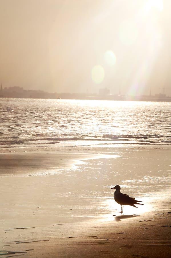 Oiseau à la plage image libre de droits
