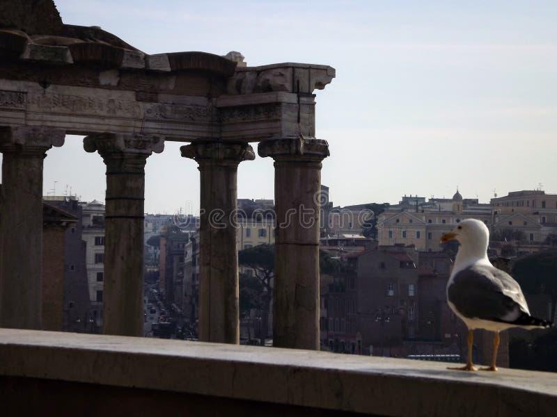 Oiseau à Rome images libres de droits