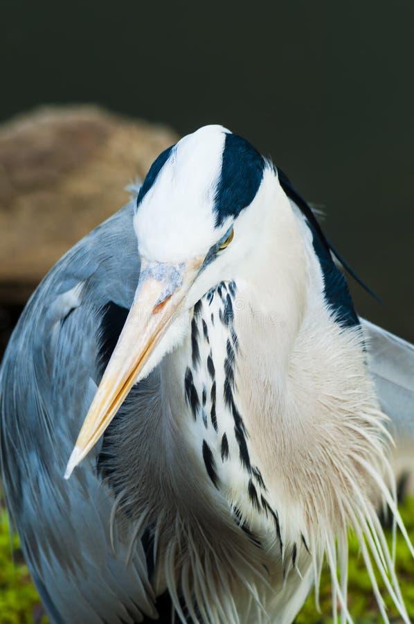 Oiseau à terre photos stock