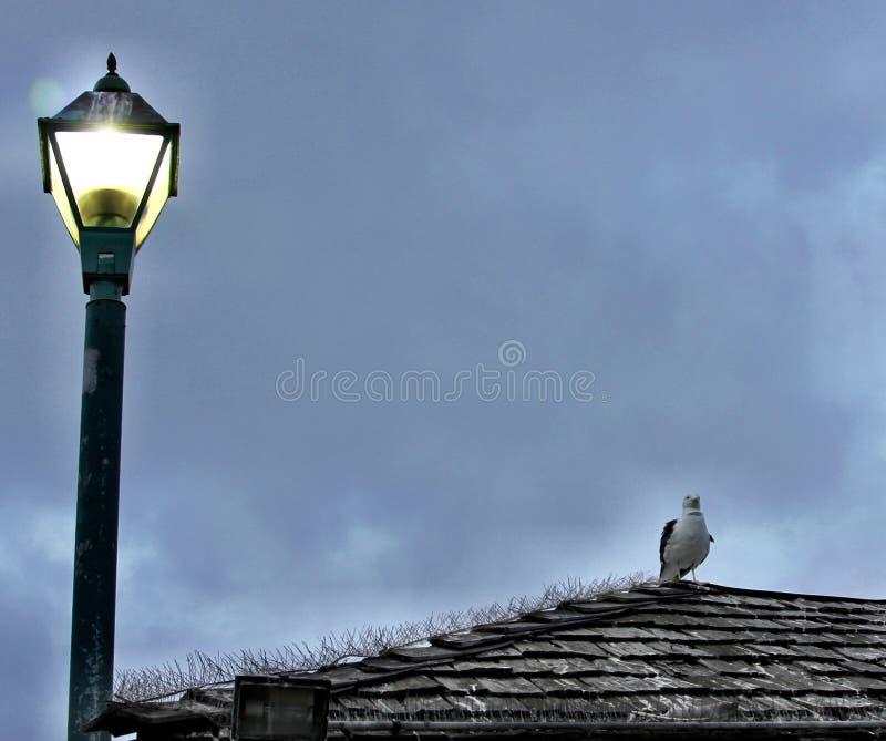 Oiseau été perché regardant l'horizon photo stock