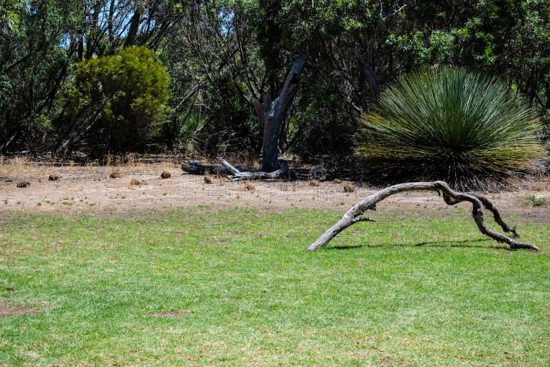 Oiseau été perché sur l'arbre photo stock