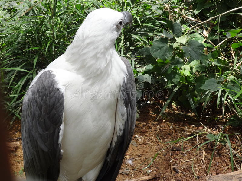 Oiseau étonnant photos libres de droits