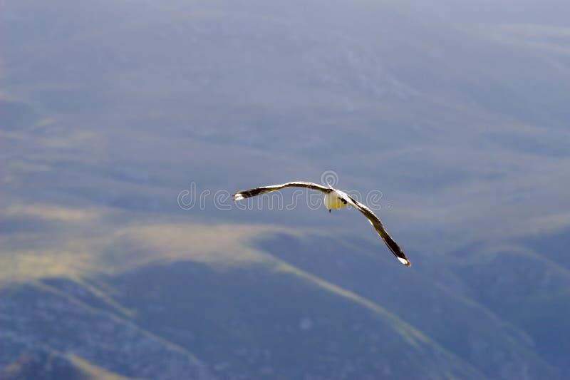 Oiseau #2 images libres de droits