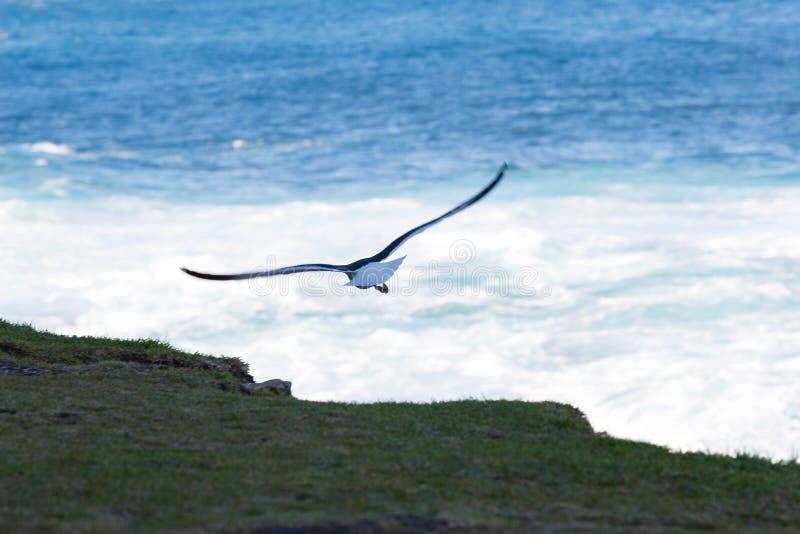 Oiseau #3 image libre de droits