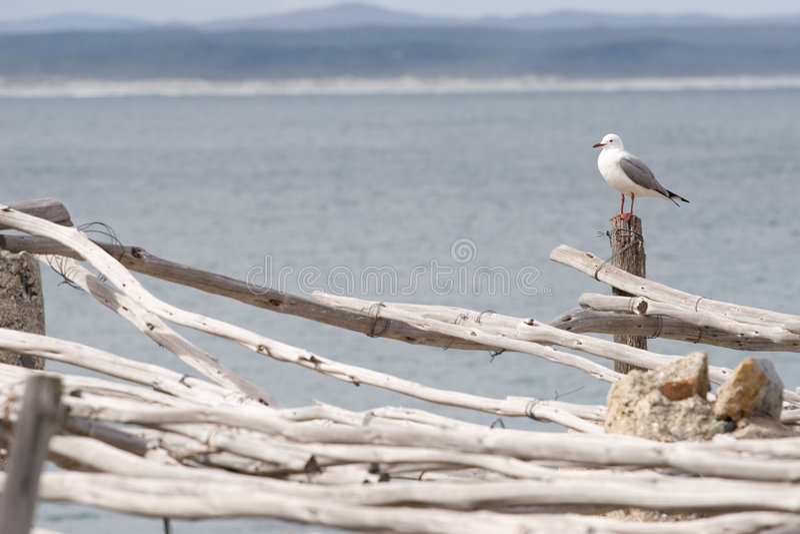 Oiseau #5 photo libre de droits