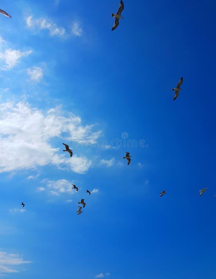 Download Oiseau photo stock. Image du ménage, trappe, trouvaille - 76081182