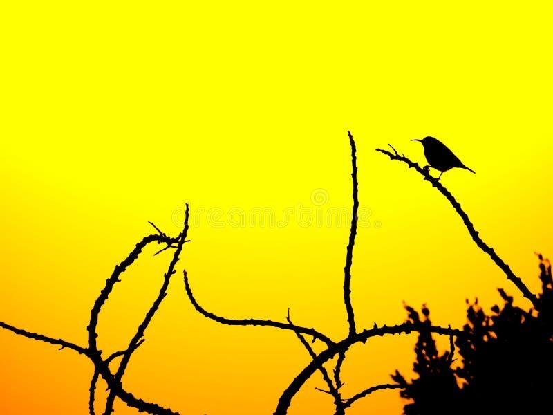 Oiseau photos stock