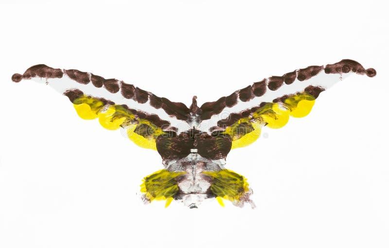 Oiseau abstrait photographie stock