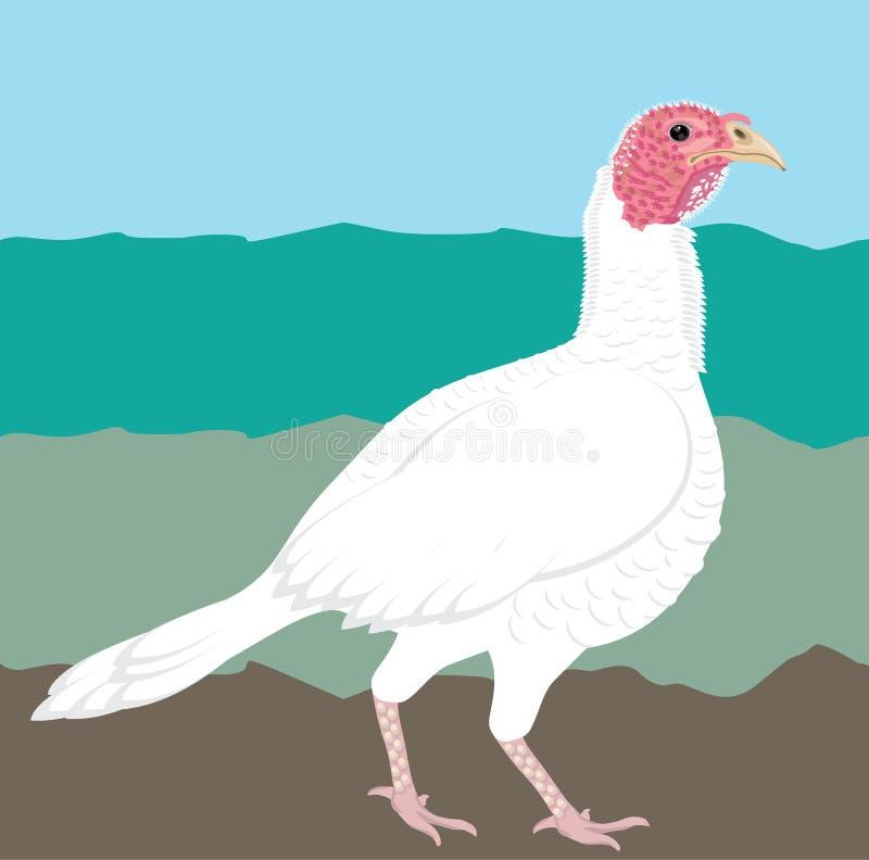 Oiseau agricole turc photographie stock libre de droits