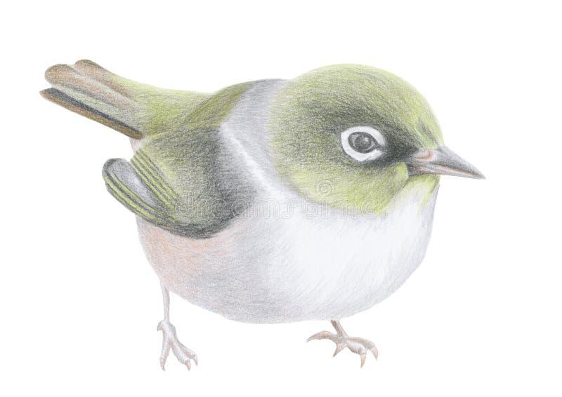 Oiseau argenté d'oeil illustration libre de droits