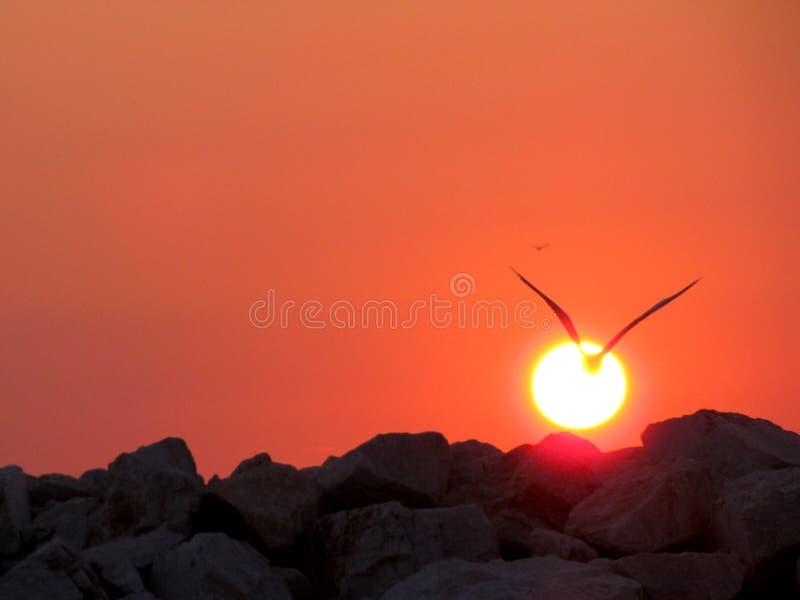 Oiseau atteignant le soleil photo stock