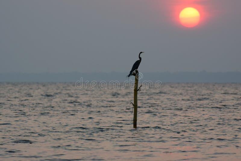 Oiseau au coucher du soleil photo stock