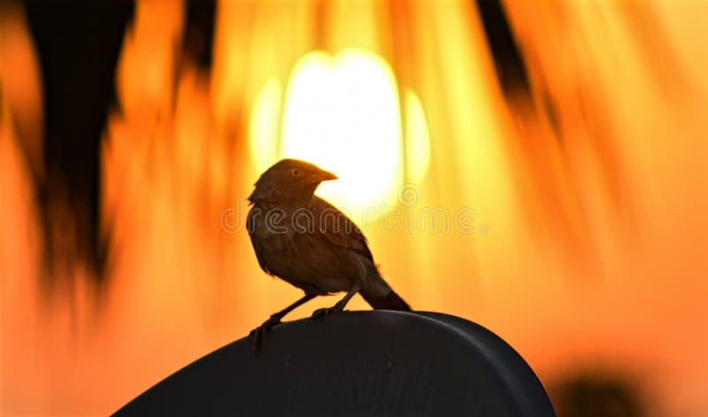 Oiseau au coucher du soleil images stock
