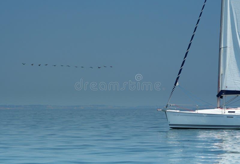 Oiseau au-dessus de l'eau silencieuse et du yacht blanc. photos stock