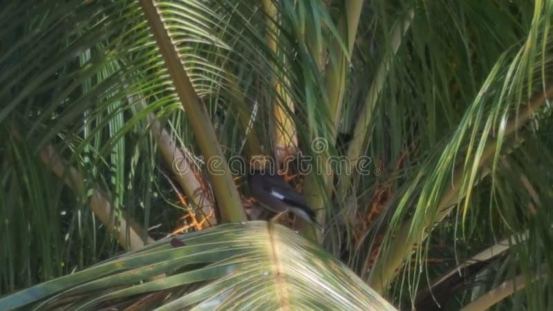 Oiseau audacieux images libres de droits