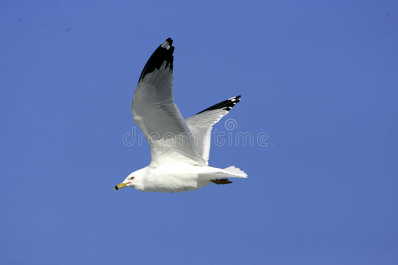 Oiseau blanc photos stock