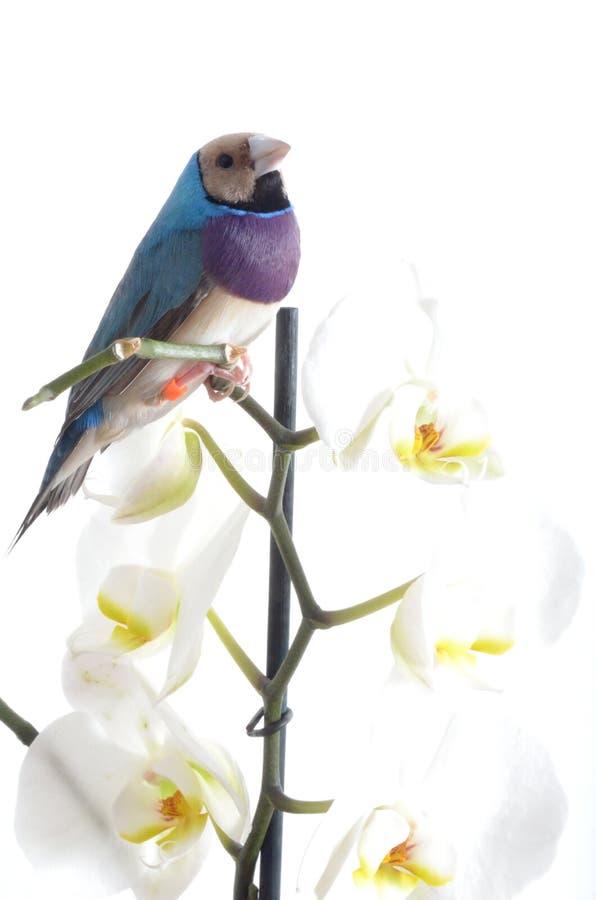 orchidee blanche oiseau