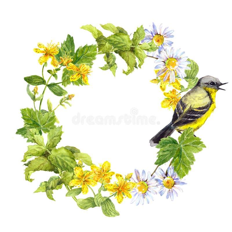 Oiseau chanteur, fleurs de pré, herbe Trame florale de cercle Guirlande pour aquarelle photographie stock libre de droits