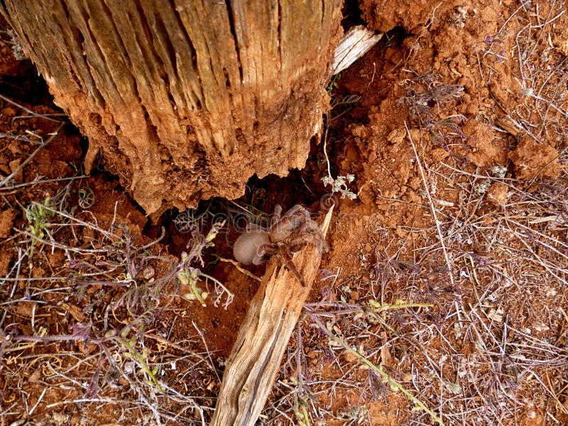 Oiseau-Consommation de l'araignée images libres de droits