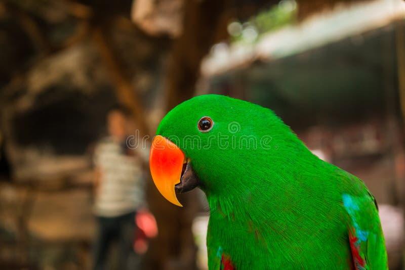 Oiseau d'amour dans le zoo photos libres de droits