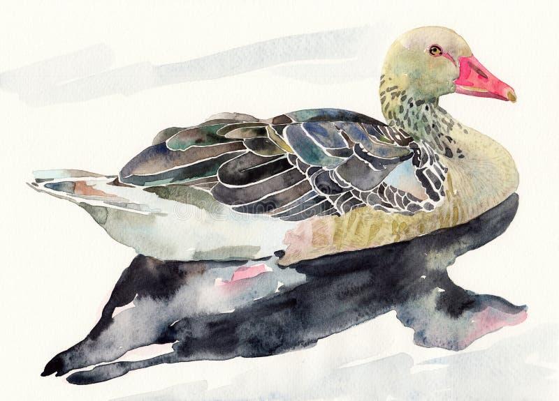 Oiseau d'aquarelle d'aspiration de main, penché illustration libre de droits