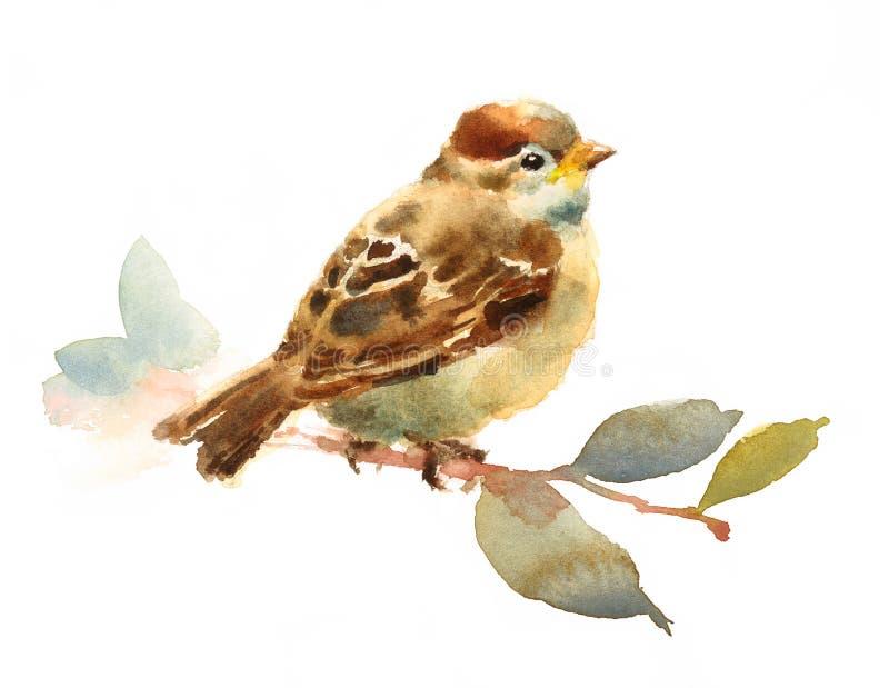 Oiseau d'aquarelle de moineau de bébé se reposant sur une branche avec tiré par la main d'illustration de feuilles d'isolement su illustration libre de droits