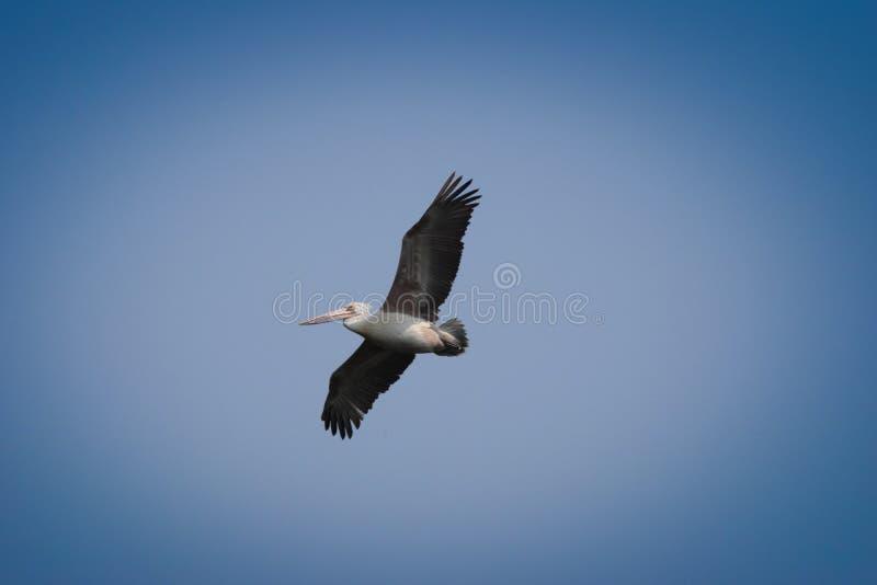 Oiseau d'eau photographie stock