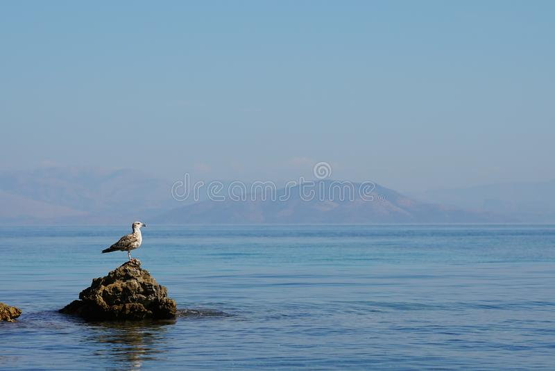 oiseau d'eau spécial en mer de Corfou, Grèce photographie stock