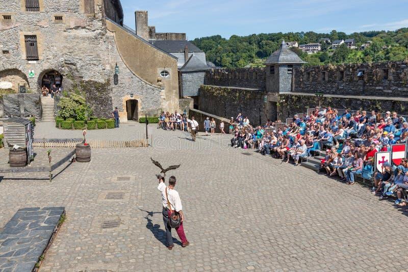 Oiseau d'exposition de proie dans le château médiéval du bouillon, Belgique photographie stock libre de droits