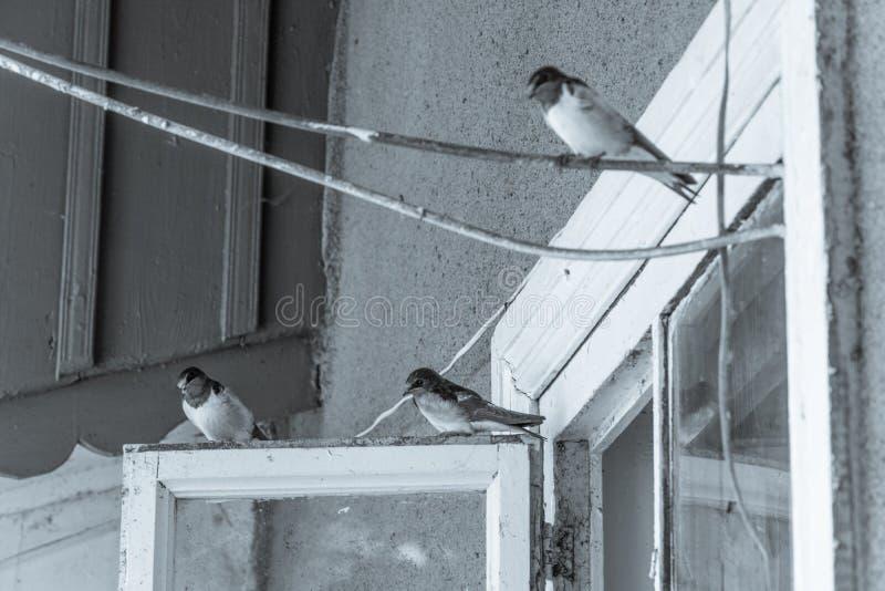 Oiseau d'hirondelle photographie stock libre de droits