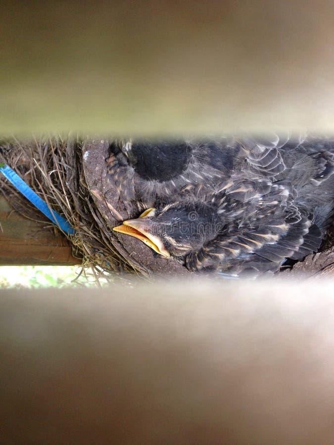 Oiseau dans différentes couleurs images libres de droits