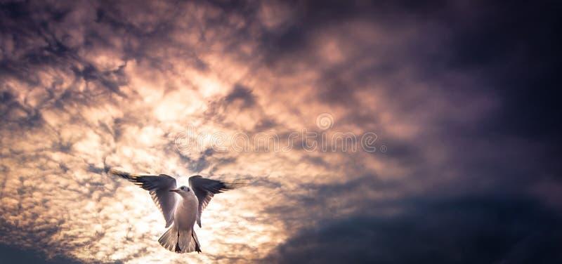 Oiseau dans l'ensemble du soleil photographie stock