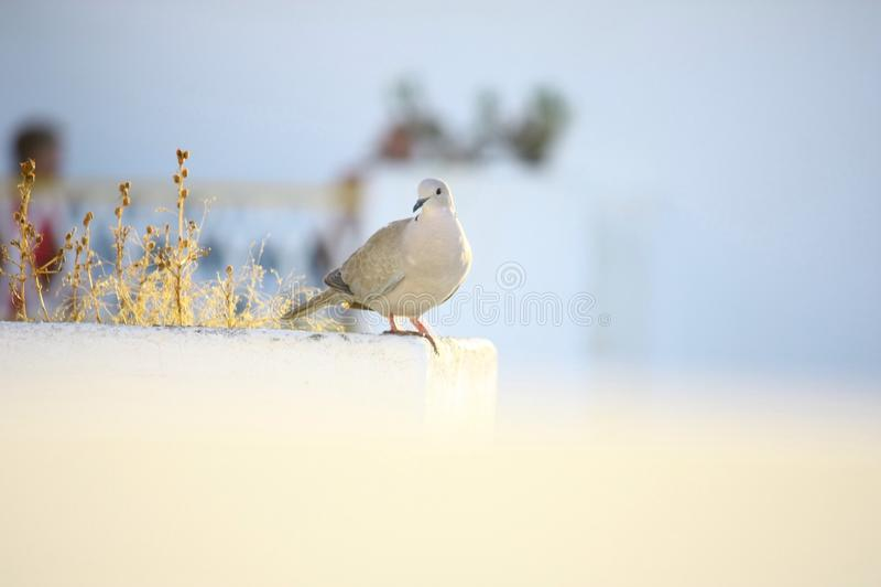 Oiseau dans la lumière photographie stock libre de droits