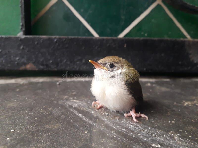 Oiseau dans la maison image stock