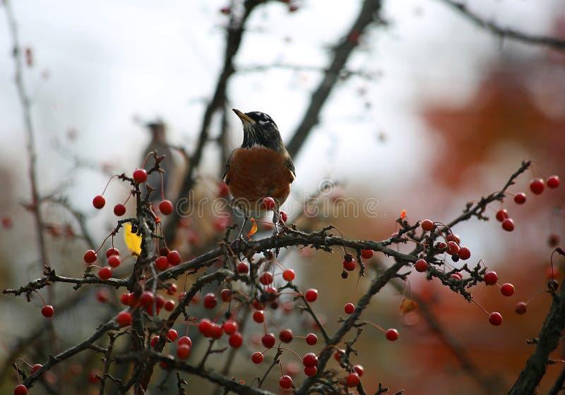 Oiseau dans un arbre images stock