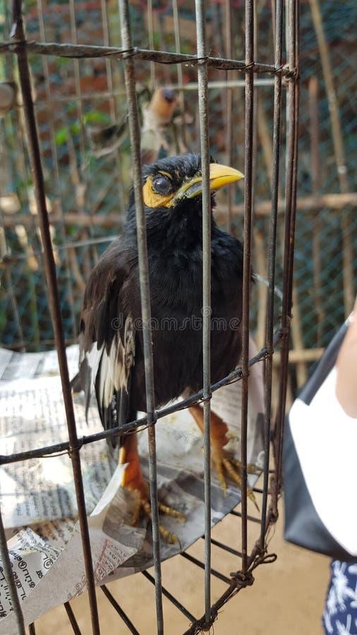 Oiseau dans une cage photos libres de droits