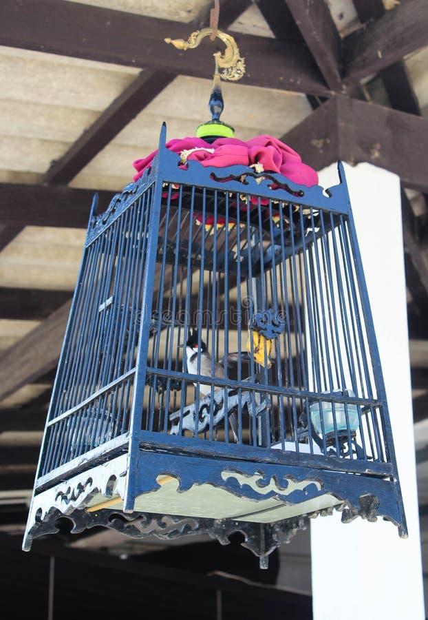 Oiseau dans une cage photographie stock libre de droits