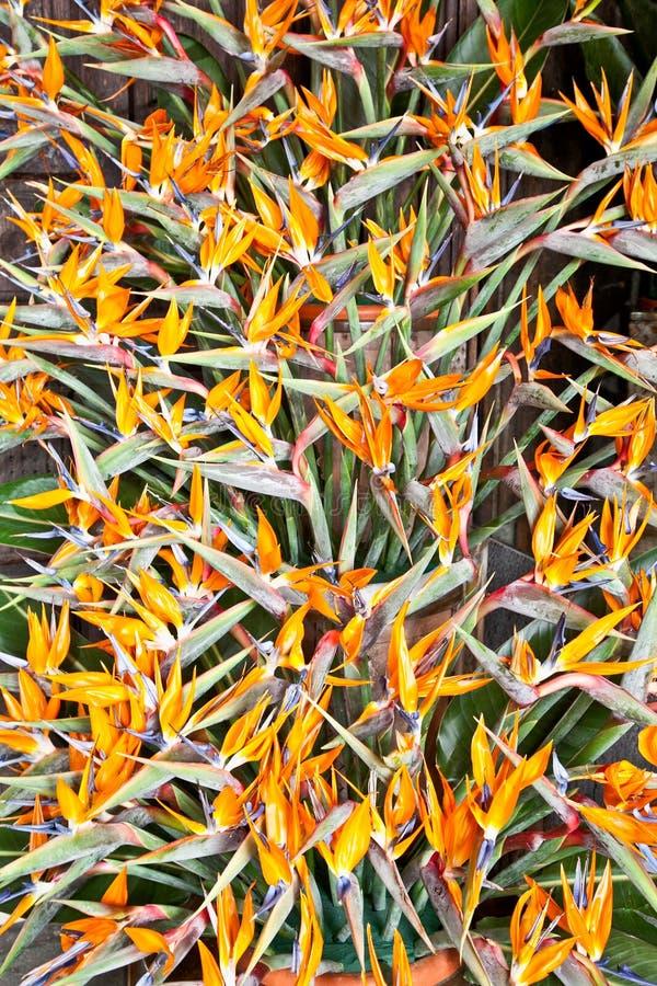 oiseau de bouquet de fleurs de paradis strelitzia image stock image du botanique centrale. Black Bedroom Furniture Sets. Home Design Ideas