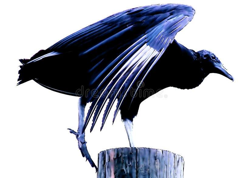 Oiseau de Bue image stock