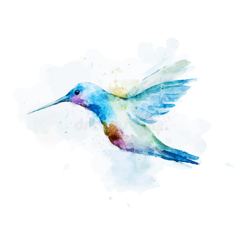 Oiseau de colibri d'aquarelle illustration libre de droits