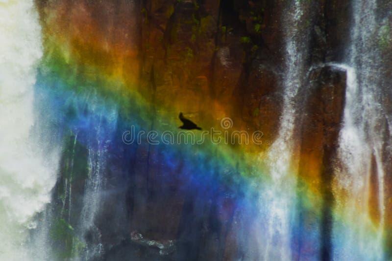 Oiseau de couleur photo stock
